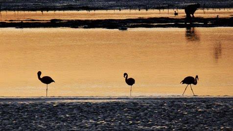 Flamencos en la laguna de Quilo