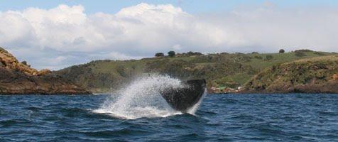 Aleta caudal de ballena cerca de Mar Brava